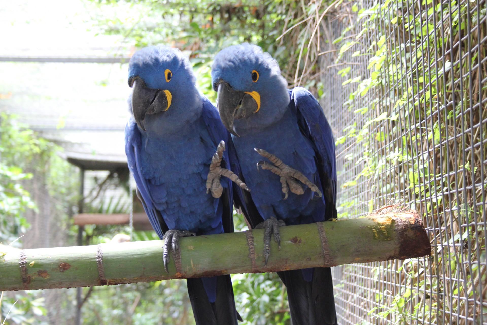 Auch Vögel erhalten bei uns die beste Betreuung