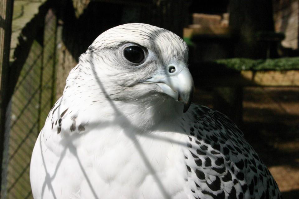 Auch Greifvögel erhalten bei uns die beste Betreuung