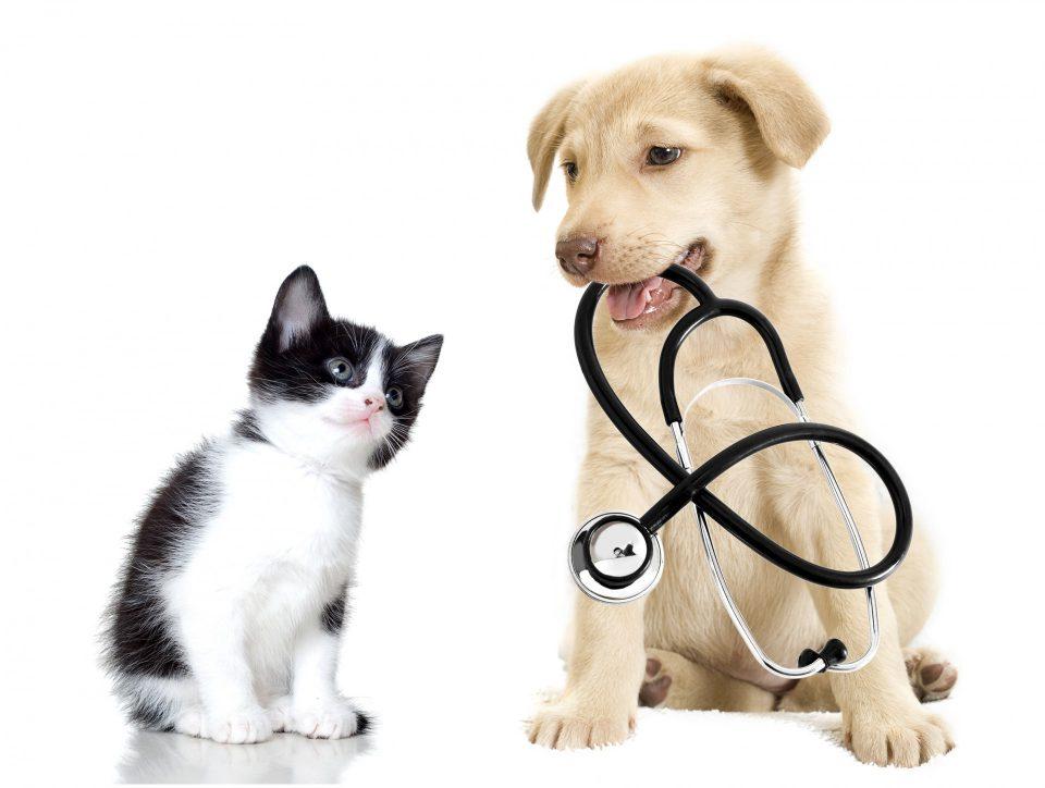 Hund und Katze rundum versorgt.